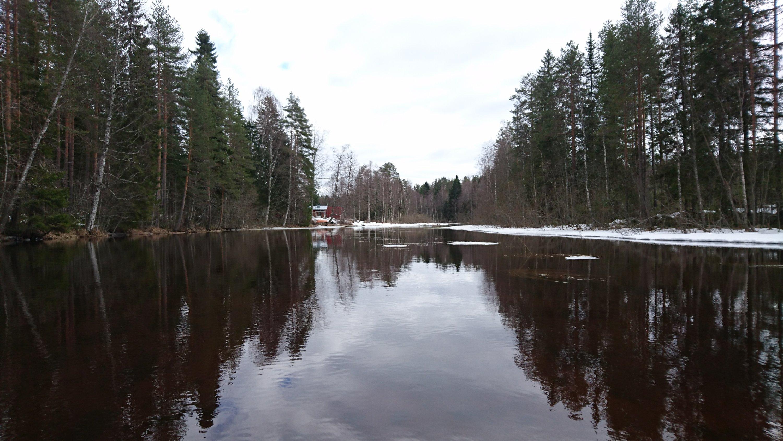Matalikko